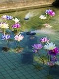 Plastic colorful decoration lotus in pond,Taipei Royalty Free Stock Photos