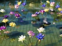 Plastic colorful decoration lotus in pond,Taipei Stock Photos