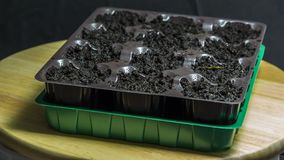 Plastic container with ground for seedlings. For seedlings royalty free stock photo