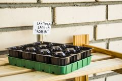 Plastic container with garden soil. Planted seedlings-image stock photos