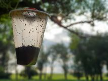 Plastic container, with trapped flies, hanging from tree branch. stock photography