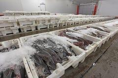 Plastic containers met vissen klaar voor markt Stock Afbeeldingen