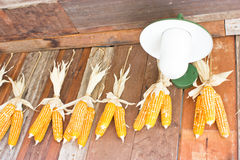 Plastic Corns Hang On Wooden Wall. Stock Photo