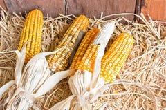 Plastic Corns Put On Hays. Royalty Free Stock Photos