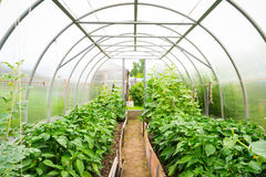 Plastic covered horticulture greenhouse. Inside plastic covered horticulture greenhouse royalty free stock photos