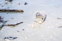 Plastic cup on the beach Royalty Free Stock Photo
