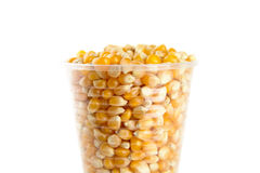 Plastic cup full of corn seeds on white Royalty Free Stock Photo