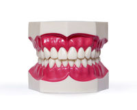 Plastic dentures on white Royalty Free Stock Photography