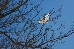 Plastic die zak in een boomtak wordt gevangen Stock Fotografie