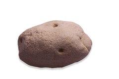 Plastic dough. Potato  on white. Stock Photography