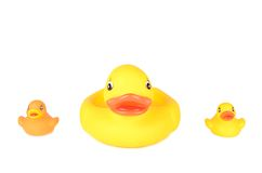 Plastic duck family isolated on white background. Plastic duck family isolated on a white background royalty free stock photo
