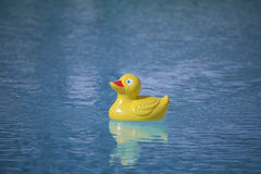 Plastic duck in pool. Yellow red rubber toy duckie in sunny blue swimming pool Royalty Free Stock Photography