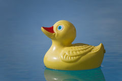 Plastic duck in pool. Yellow red rubber toy duckie in sunny blue swimming pool Royalty Free Stock Photo