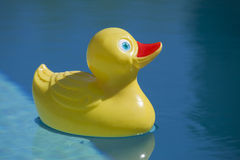 Plastic duck in pool. Yellow red rubber toy duckie in sunny blue swimming pool Royalty Free Stock Image