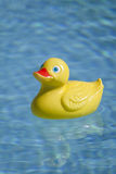 Plastic duck in pool. Yellow red rubber toy duckie in sunny blue swimming pool Stock Images