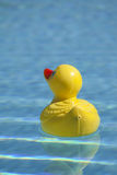 Plastic duck in pool. Yellow red rubber toy duckie in sunny blue swimming pool Royalty Free Stock Images