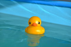 Plastic duck Stock Photo