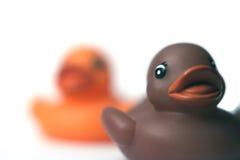 Plastic ducks Stock Photos