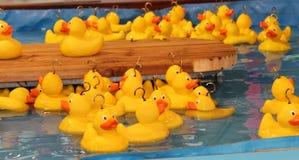 Plastic Ducks. Stock Photography