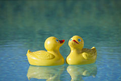 Plastic ducks in pool. Yellow red rubber toy duckie in sunny blue swimming pool Royalty Free Stock Photos