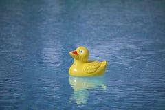Plastic eend in pool Royalty-vrije Stock Fotografie