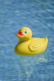 Plastic eend in pool Stock Afbeeldingen