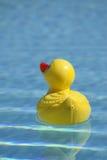 Plastic eend in pool Royalty-vrije Stock Afbeeldingen