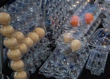 Plastic Egg Container stock photos