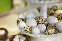Plastic eggs Stock Images