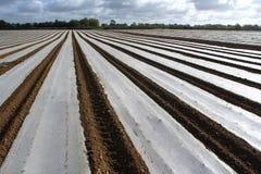 Plastic field Stock Photos
