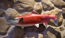 Plastic fish on wall art. Nice plastic fish on rock wall in a hotel stock photo