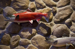 Plastic fish on wall art. Nice plastic fish on rock wall in a hotel Stock Images