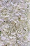 Plastic flower for decoration. Petals flower background rose, flower, flowers Royalty Free Stock Images
