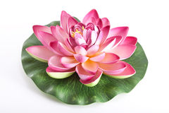 Plastic flower of a lotus royalty free stock photos