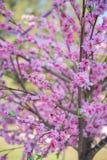 Plastic flower sakura models Royalty Free Stock Photography