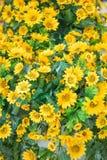 Plastic flower tree marigold models Stock Photos
