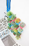 Plastic flowers with colorful plastic vase hang. Stock Photo