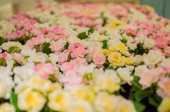 Plastic flowers field Royalty Free Stock Images