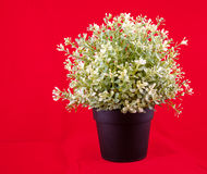 Plastic flowers in a pot Stock Image