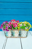 Plastic flowers. In pot on blue table stock photo