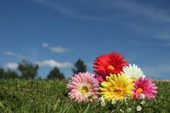 Plastic flowers on real grass Stock Photo