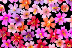 Plastic flowers from recycle botton for background Stock Photos