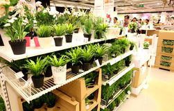 Plastic flowers in supermarket, plastic flowers store Stock Photos