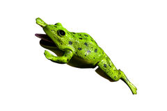 Plastic Frog Royalty Free Stock Photos