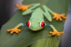 Plastic frog on a leaf Royalty Free Stock Photos