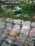 Plastic frog pops out of pond Royalty Free Stock Images