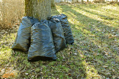 Plastic garbage bags. Black plastic garbage bags after the cleaning in the park stock photos