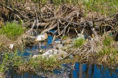 Plastic garbage of bottles and bags pollution at shoreline in a small river. Detail photo royalty free stock photo