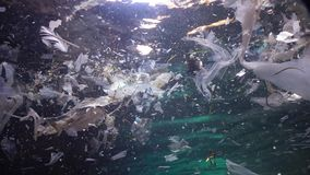 Plastic garbage and other debris floating underwater. Marine pollution. Plastic debris in the water, killing wildlife. Black Sea, Bulgary stock video footage