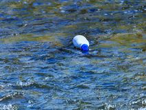 Plastic garbage polluting the mountain river. Plastic bottle thrown by man polluting the river royalty free stock images